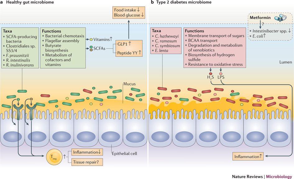 Ricerca sul microbiota